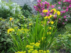 Flower garden at the Artist Inn