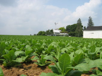 Lancaster County farm scene